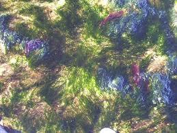 Les mouvements dans la peinture abstraction lyrique for Abstraction lyrique