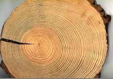 Les matières de base de l'industrie papetière : Le bois